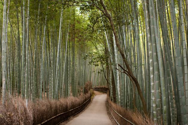 Forêt de bambou de Arashiyama a Kyoto Japon