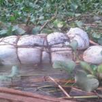 Burundi-Rwanda: le mystères des cadavres du lac Rweru bientot dissipé?