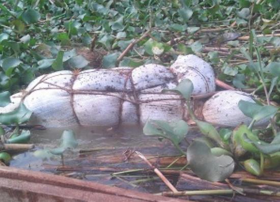 cadavres sur le lac Rweru