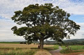 arbre menacé